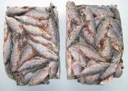 Продам речную рыбу лещь, плотву, густеру свежемороденную
