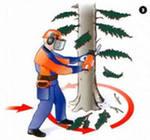 Спил(обрезка) деревьев,  распиловка дров в Феодосии 0955295046