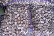 Продам чеснок. Однозубка,  воздушка,  посевной материал