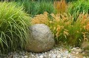 Растения на весну.Многолетние растения
