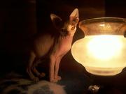 Милые котята ищут своих добрых хозяев!