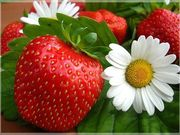 саженцы малины, клубники, многолетние цветы