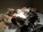 3-х суточные цыплята!Домашнее яйцо!Утята!