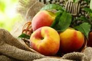 Уборка фруктов персики абрикосы