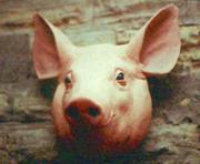 Свиная головизна. Свиной жир.